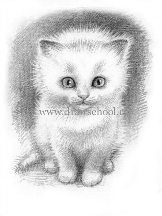 Рисуем простым карандашом милого котёнка 7