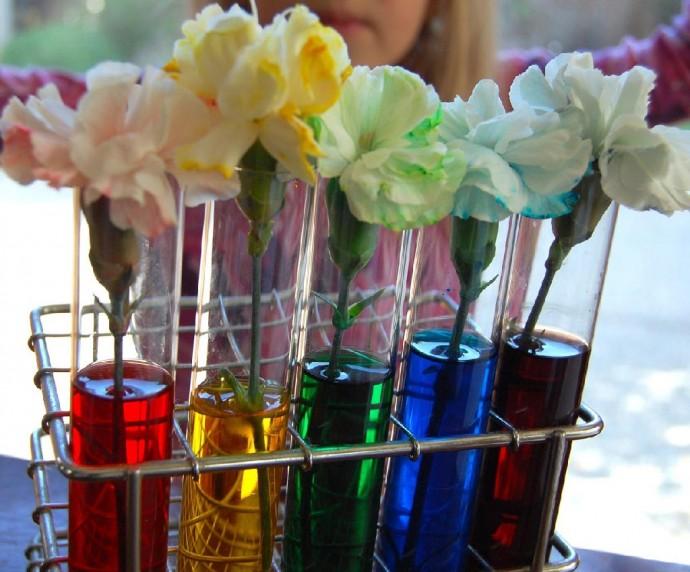 Как изменить окраску цветов благодаря воде