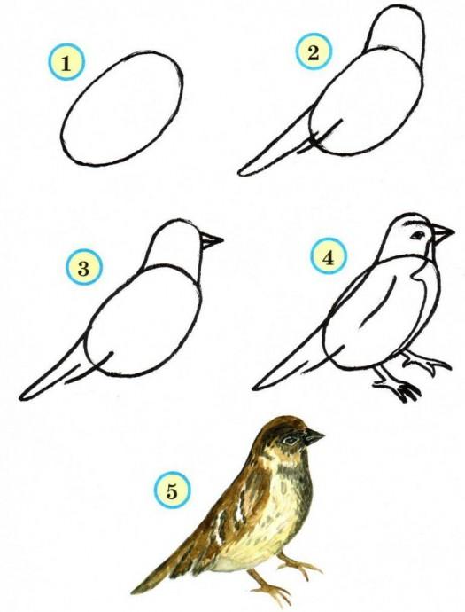 Рисуем птиц 0