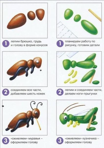 Учимся лепить насекомых с детьми