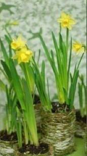 Симпатичные горшочки для цветов
