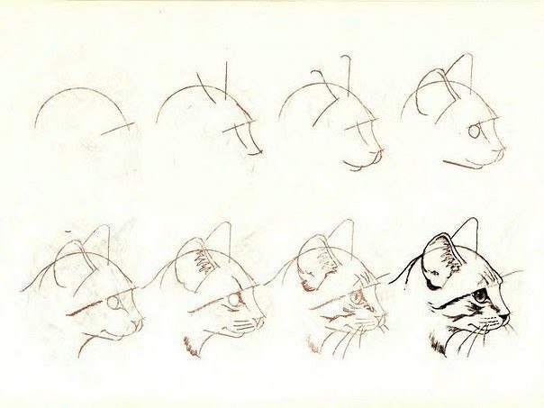 Рисуем кота поэтапно