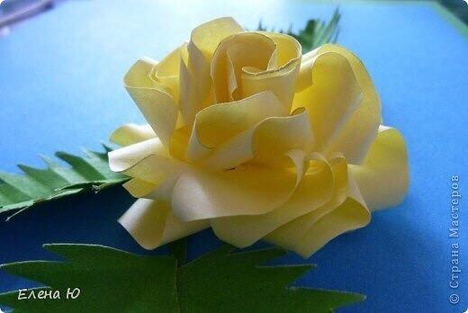 Объемные розы из бумаги