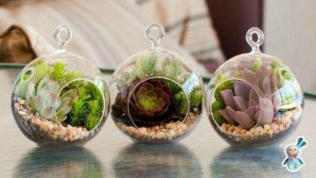 Идеи для создания флорариума с детьми