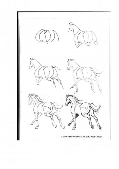 Рисуем лошадей