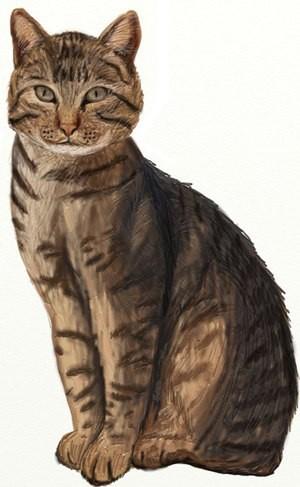 Рисуем кота