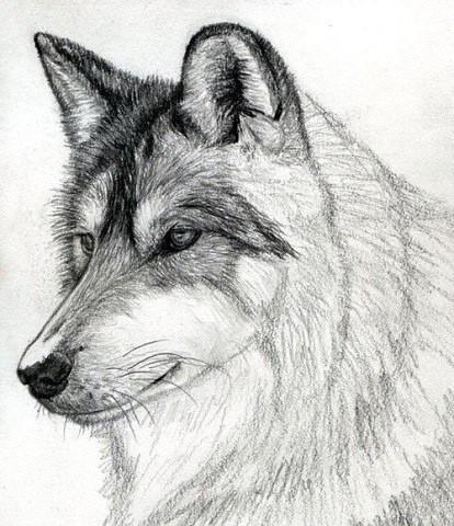 Рисуем с детьми волка