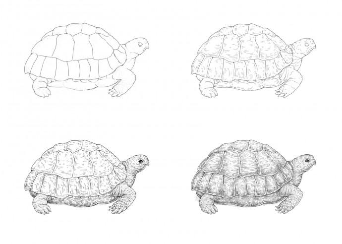 Рисуем с детьми черепаху