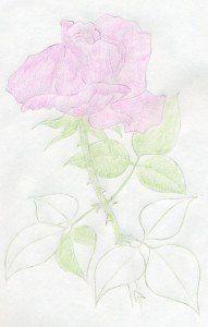 Рисуем с детьми розу