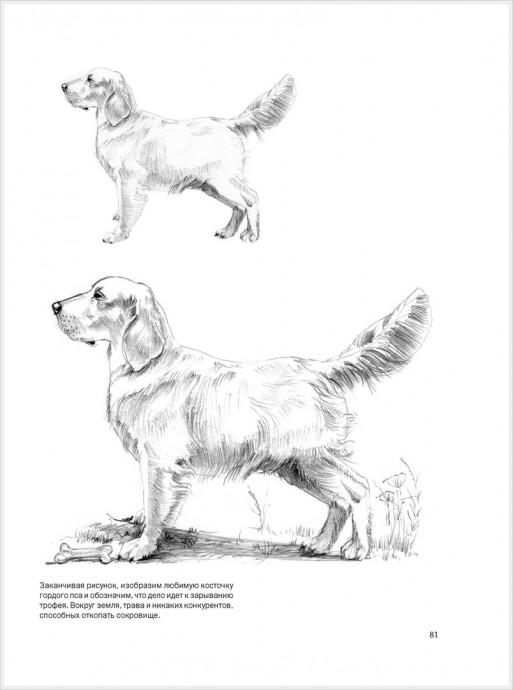 Рисуем животных: собака, волк, кошка