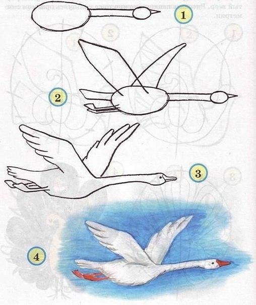 Рисуем птиц 7