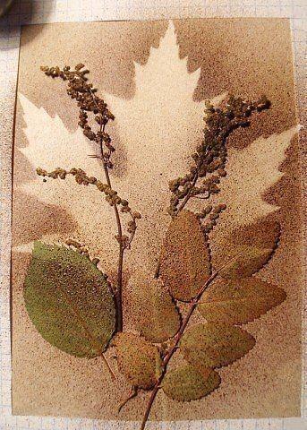 Творчество из силуэтов растений 0