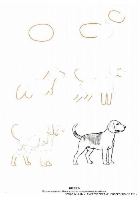 Рисуем самых разных собак