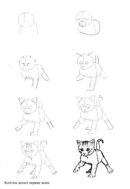 Учимся с детьми рисовать разные породы кошек