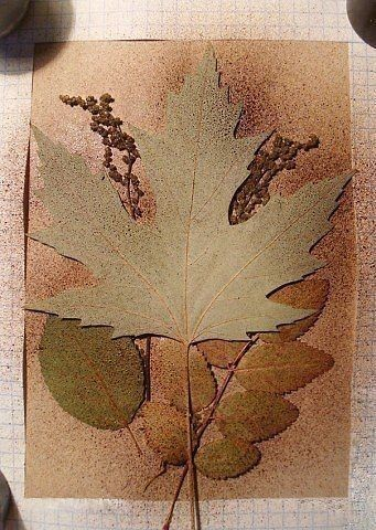 Творчество из силуэтов растений 4