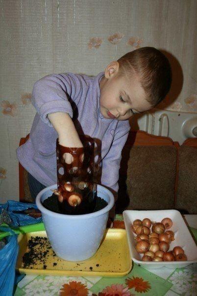 Выращиваем с детьми лук