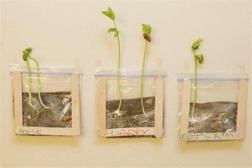 Простая поделка для изучения роста растений