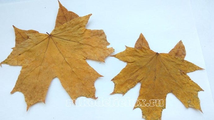 """Аппликация из осенних листьев """"Лисята"""""""