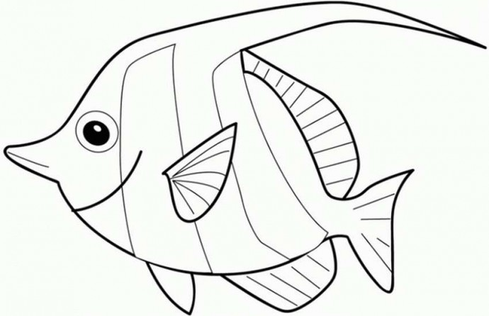 Рыбы-подушки в миниатюрном размере