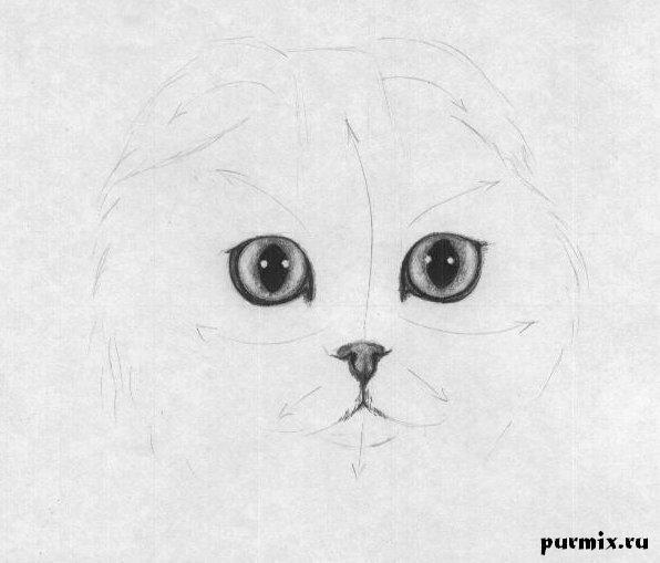 Печальный кот