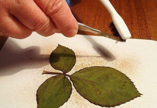 Творчество из силуэтов растений 3