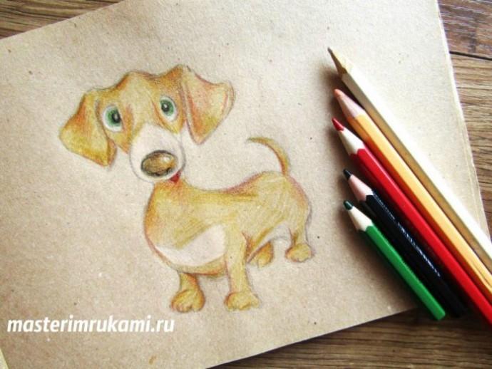 Такса цветными карандашами