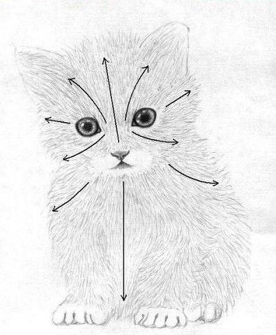 Рисуем маленького котёнка