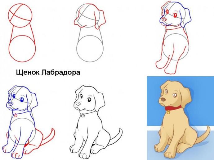 Учимся с детьми рисовать разные породы собачек