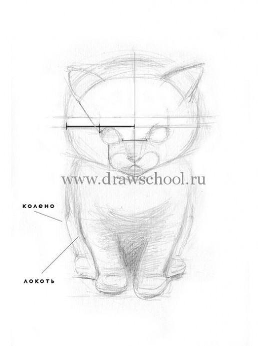 Рисуем простым карандашом милого котёнка 4