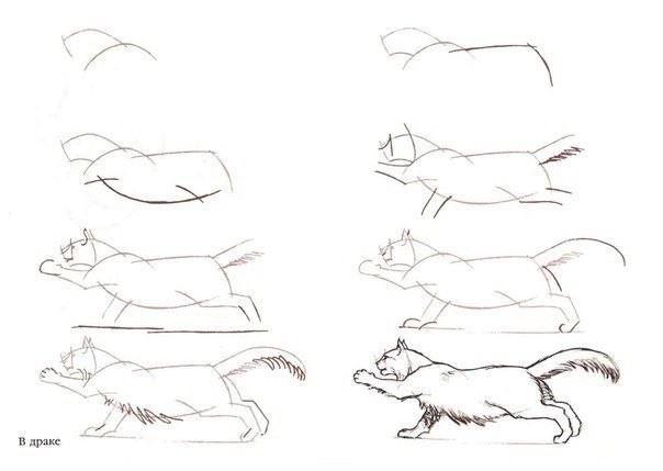 Рисуем с детьми разные породы кошек
