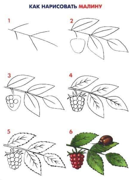 Учим детей рисовать листья малины
