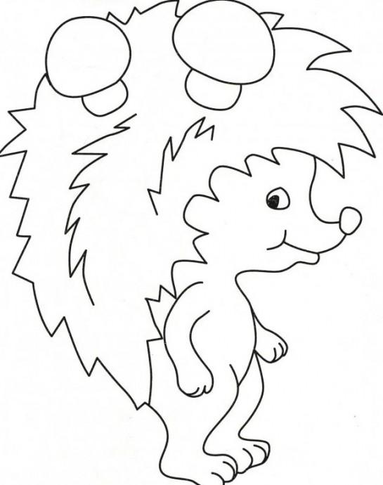 Ёжик с натуральными колючками
