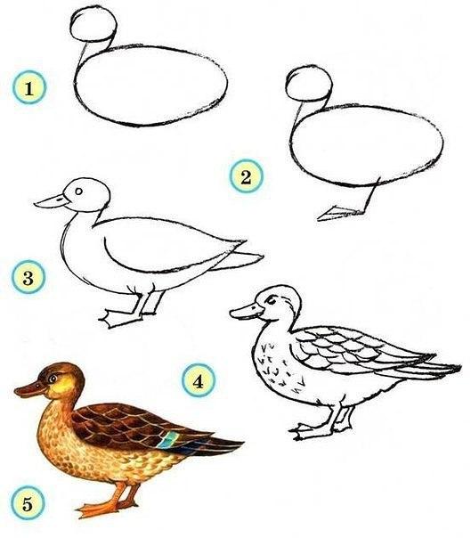 Рисуем птиц 8