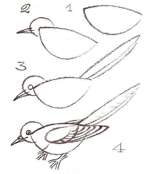 Рисуем птиц 9