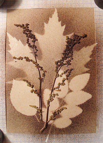 Творчество из силуэтов растений 1