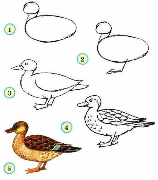 Как нарисовать птиц с детьми